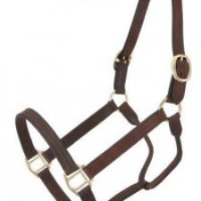HALTERS, TACK AND TRAINING